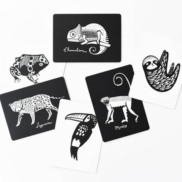 """Cartes d'Art Imagier """"Animaux de la Forêt tropicale"""""""