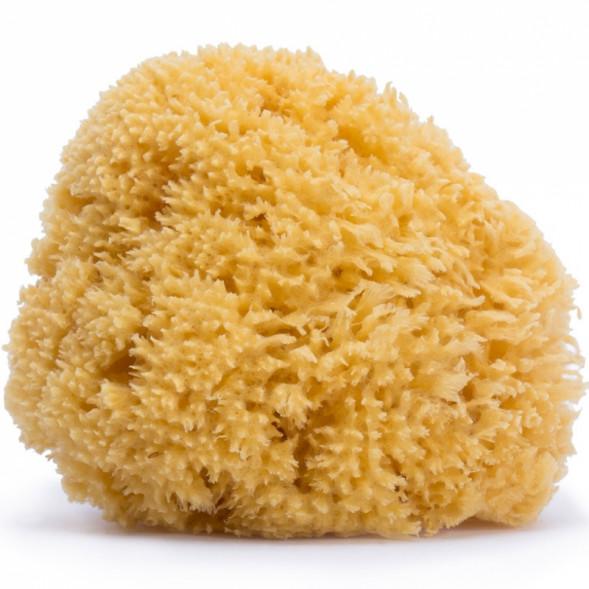 Eponge en fibre naturelle (22 cm)